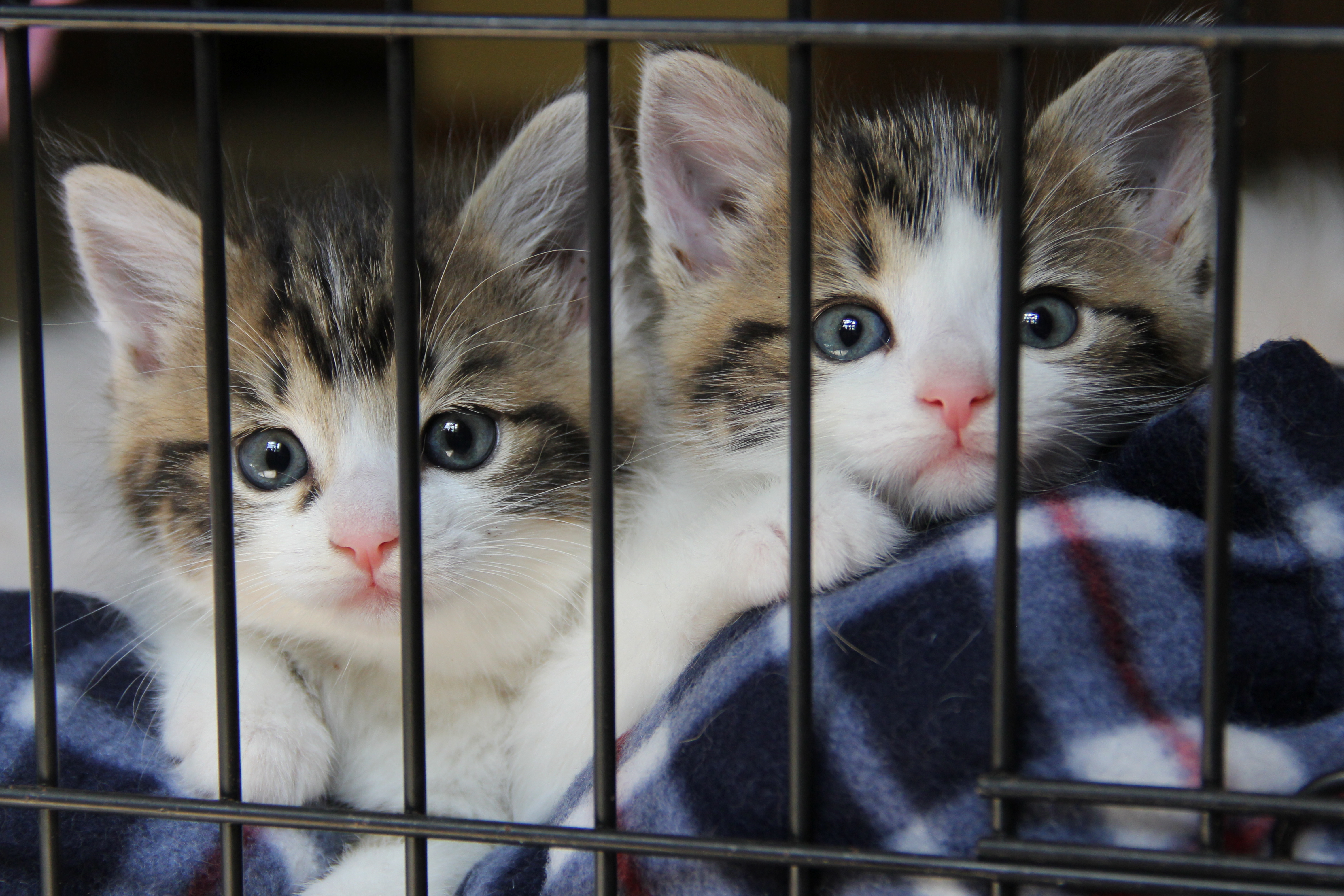 kittens in crate