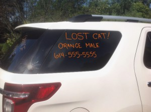 car ad lost pet