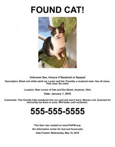 Found Cat Dog Flyer