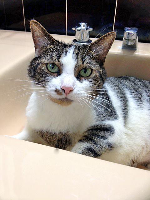 harvey in sink
