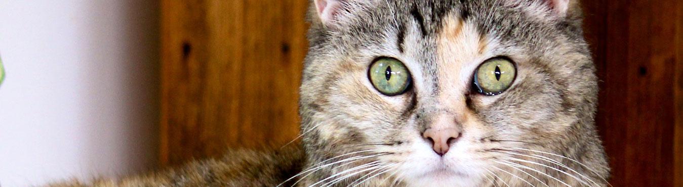 pet-fbi-home-cat