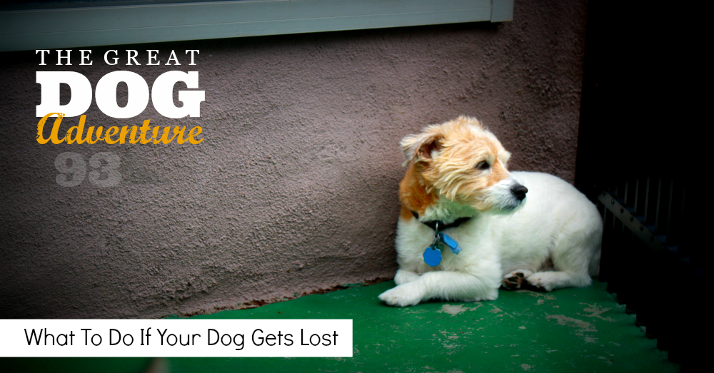 What To Do If Your Dog Gets Lost - Link to Podcast
