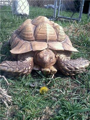 lost tortoise recovered