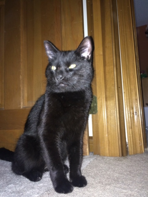 Cat Found after two months