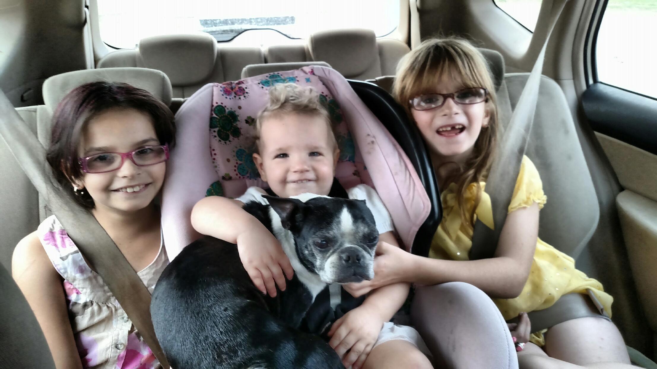 Reunited Boston Terrier