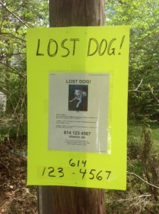 lost dog flyer on neon poster